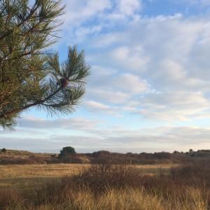 Natuur Vlieland, achter de camping